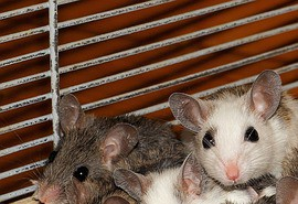 sennik Atak myszy - Sennik