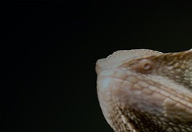 sennik Jaszczurka - sennik