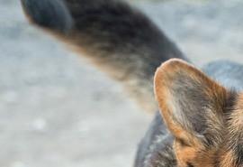 sennik Pies gryzie - sennik