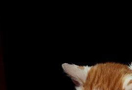 sennik Pies gryzie kota - Sennik