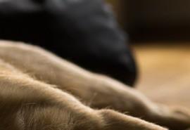 sennik Pies martwy - Sennik