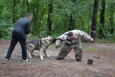 sennik Ugryzienie przez psa - sennik